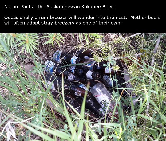 Nature Facts- Sask Kokanee